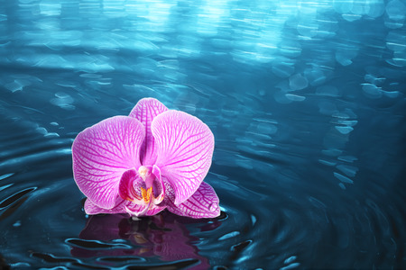 Orchid in water with lights 版權商用圖片
