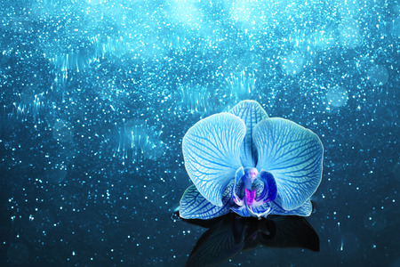 Orchid in water with lights Stockfoto