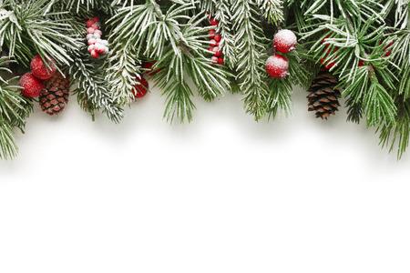 felicitaciones navide�as: La nieve cubr�a las ramas de �rbol de Navidad de fondo
