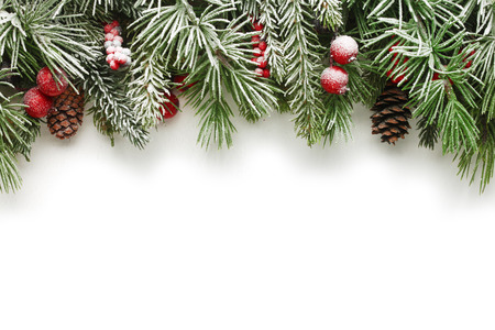 Snow covered Christmas tree branches background Stock Photo