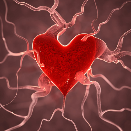 human vein heartbeat: Heart background