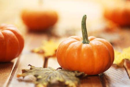 autumn colour: Autumn pumpkin background Stock Photo