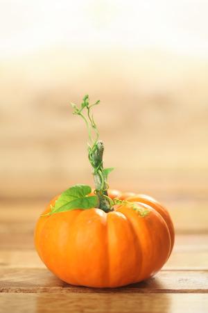 vid: Autumn pumpkin background Foto de archivo