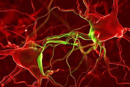 sensory receptor: Nerves abstract background