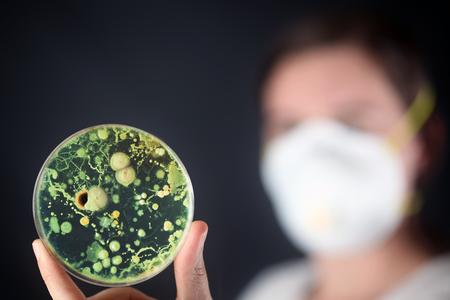 El examen de bacterias en una placa de Petri