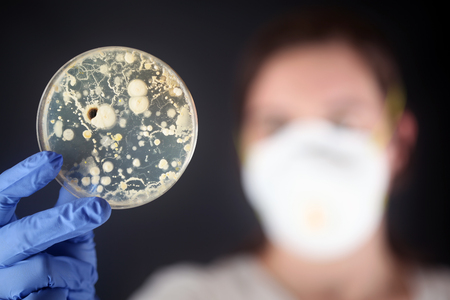 dish: Examining bacteria in a petri dish Stock Photo