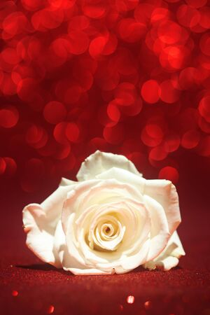 white red: Beautiful white rose on sparkling red background