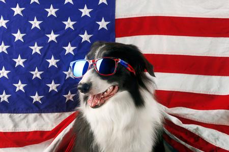 border collie hermosa delante de una bandera de EE.UU. con gafas de sol Foto de archivo