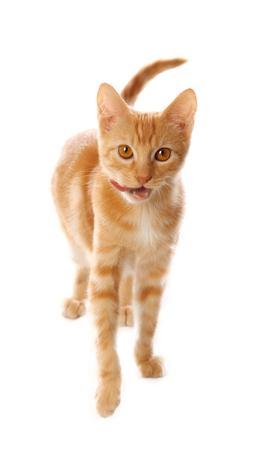 Cute little orange tabby kitten, isolated on white background 写真素材