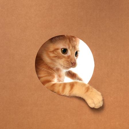 Cute little orange tabby kitten playing in a cardboard box Stock fotó