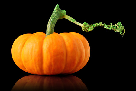 Single orange pumpkin isolated on black Stock Photo