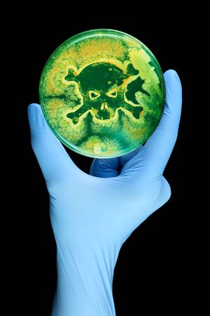 Gloved hand holding petri dish growing bacteria in the shape of a skull and crossbone Stock Photo