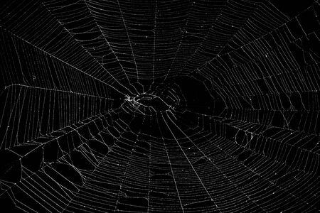 Echt spinnenweb geïsoleerd op zwart