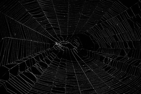Real spider web isolated on black