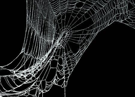 Echte vorst bedekt spinnenweb geïsoleerd op zwart