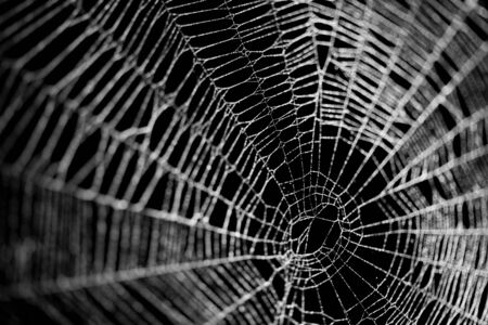 Real frost covered spider web isolated on black Imagens