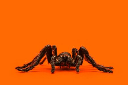 Single real tarantula spider on orange background. Creepy Halloween concept with blank space for text. Stock fotó