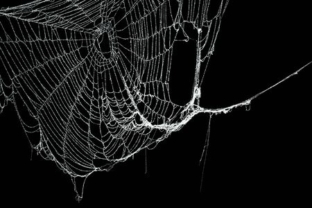 Real frost covered spider web isolated on black Stock fotó