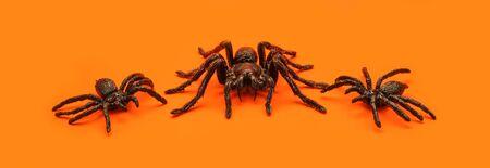 Three creepy tarantula spiders on orange Halloween background.