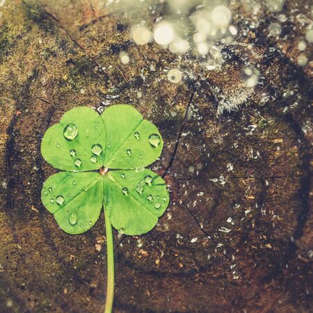 Water splashing on lucky four leaf clover, good luck shamrock, or lucky charm. 版權商用圖片
