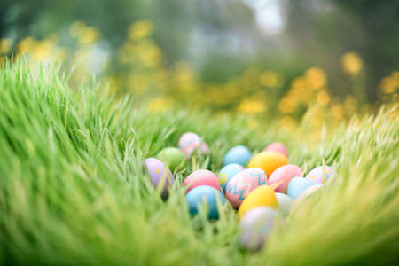 Colorful painted Easter eggs hidden in grass for an Easter egg hunt.
