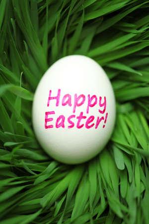 Single Happy Easter egg hidden in grass 版權商用圖片