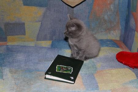 ashy: Ashy kitten