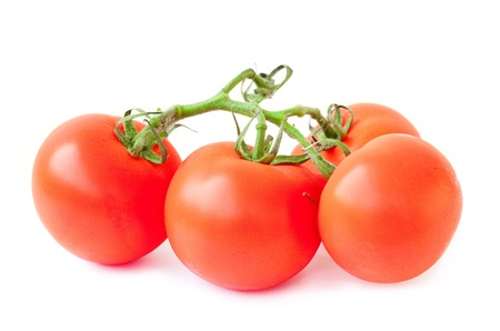 branch of tomato on white background photo