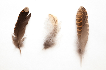 set of different feathers on white background