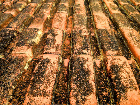 moldy: Old moldy roof