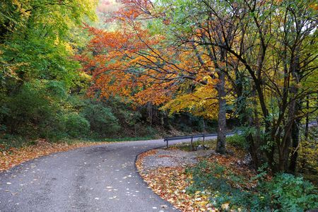 Road crossing a wood in mid fall photo