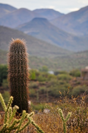 Southwestern desert scene with a barrel cactus in the foreground of beautiful blue mountains photo
