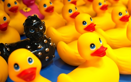 dominatrix: A studded black bath rubber duck stands out against the crowd of yellow rubber ducks on a blue base