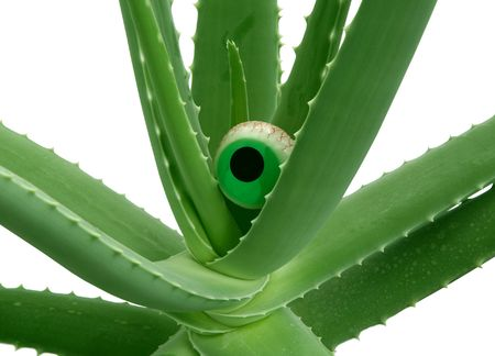 Detail of aloe vera with an eye Stock Photo - 5775579