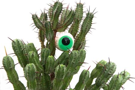observes: The cactus with an eye observes of people