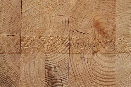 close-up wooden cut texture Stock Photo - 6821332