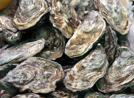 Pile of freshly caught closed oyster shells  Stock Photo
