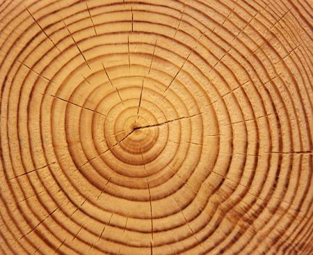 La texture du bois de tronc d'arbre coupé, gros plan