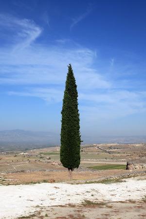 cypress tree: Lone cypress tree on a mountain plateau, landscape