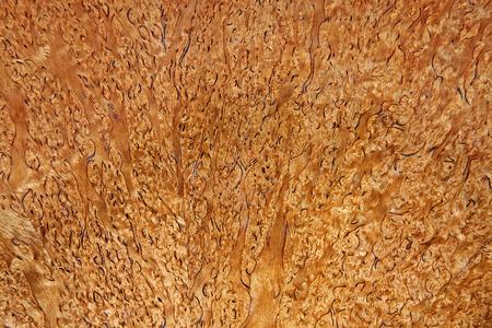 balsa: the texture of the bark of the balsa tree