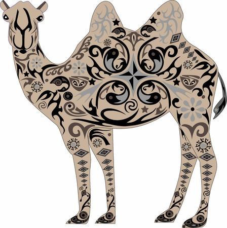 ruminant: camel Illustration
