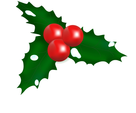 shrub: Mistletoe New Years, a plant with berries, sharp leaves, wildlife, a Christmas decoration, snow on leaves, an ornamental shrub, a celebration symbol, winter ornament, red fruits, Christmas ornament