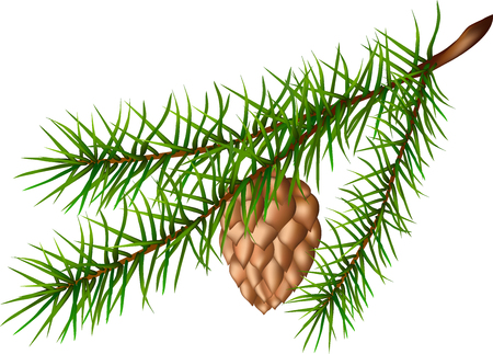 Fir-tree branch, brown cone, green plant, fir paw, long needles, pine branch, Christmas decoration, evergreen plant, wildlife, illustration of a fir-tree branch,  イラスト・ベクター素材