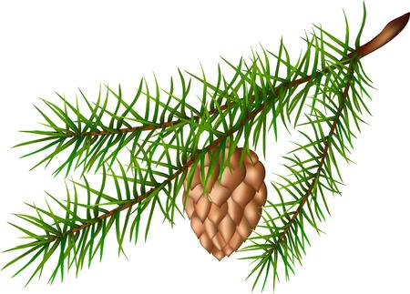 Fir-tree branch, brown cone, green plant, fir paw, long needles, pine branch, Christmas decoration, evergreen plant, wildlife, illustration of a fir-tree branch, 일러스트