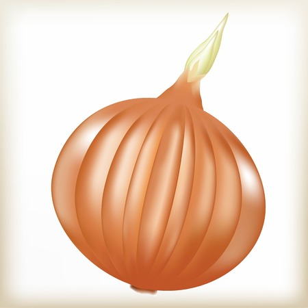 culinary: Onions napiform, food for health, green escape, a culinary product, green vegetable, a bulb of brown color, an onions illustration