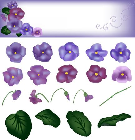 a bud: Violet flowers, house plants, design of the invitation, flower pattern, card decor, spring flowers, there is a lot of flora, set from violets, darkly green leaf, a bud flower