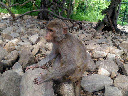 Wild monkey is sitting on the stones