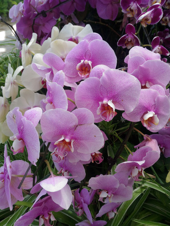 Pink orchids, a beautiful exotic flower, a plant with many buds, green grass, Asian fauna, twig