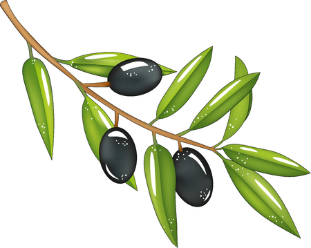 Branch with olives, black olives, green leaves, isolated