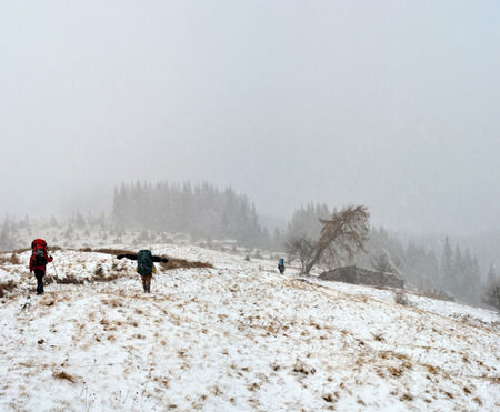 snowstorm: Hiking in the snowstorm in Carpathian mountains Ukraine.